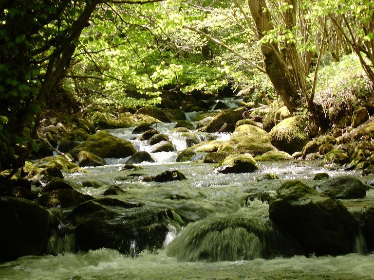 Petit ruisseau d'Ariège 1210345302-ruisseau1
