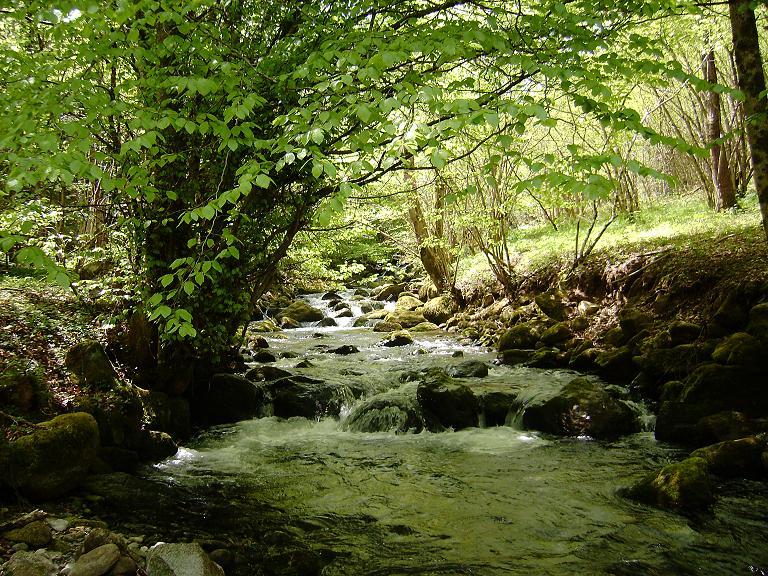 Petit ruisseau d'Ariège 1210345361-ruisseau2