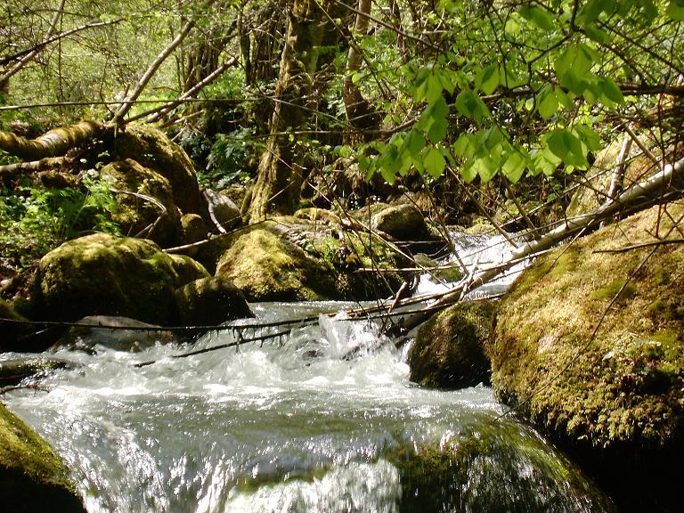 Petit ruisseau d'Ariège 1210345410-ruisseau3