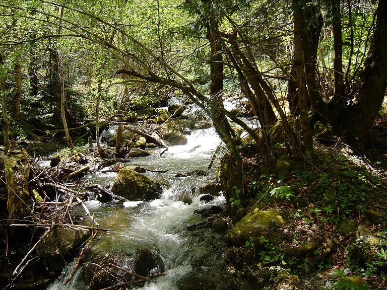 Petit ruisseau d'Ariège 1210345452-ruisseau5